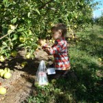 Going on a field trip - Apple picking