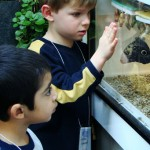 Going on a field trip - visiting the Butterfly house
