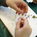Life at school - flower dissection