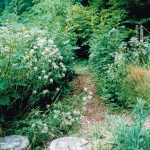 School Outdoors - woodland trail (2)