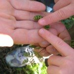 School outdoors - discovering the nature